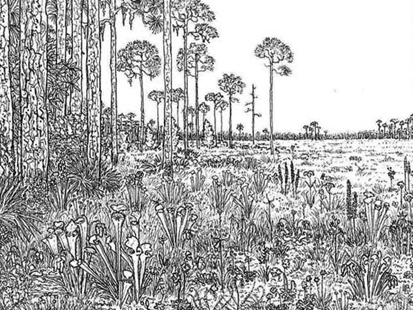 Amazing Rainforest Landscape Coloring Page