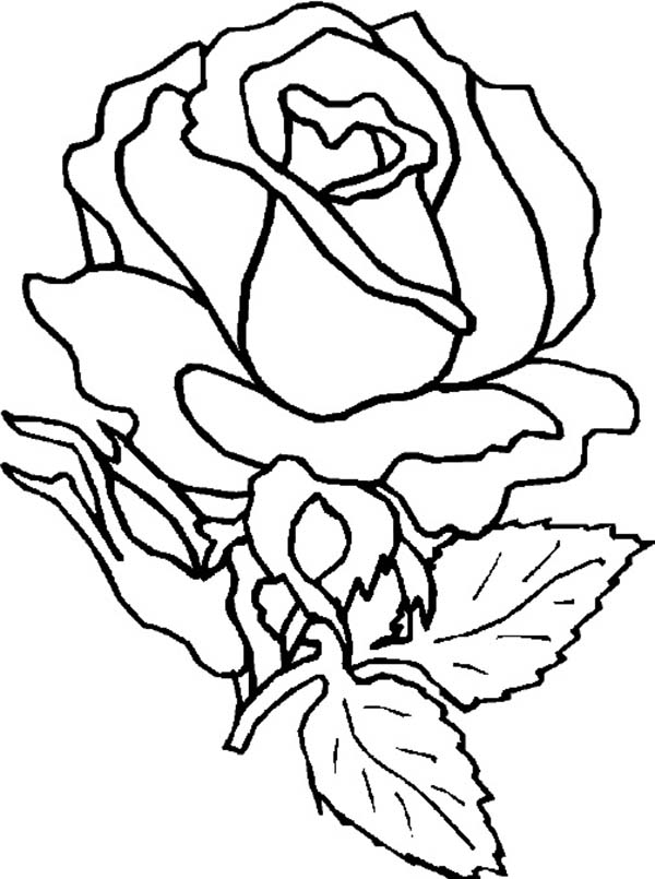 Amazing Rose Flower Coloring Page Download Print Online