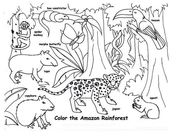 print amazon rainforest animals coloring page in full size