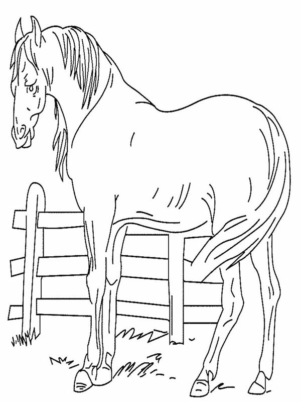 An Old Horse In Horses Coloring Page Download Amp Print