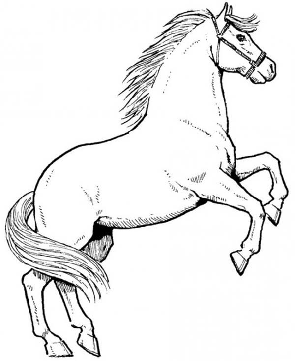 horse awesome male horse in horses coloring page awesome male horse in horses coloring - Horse Coloring Pages