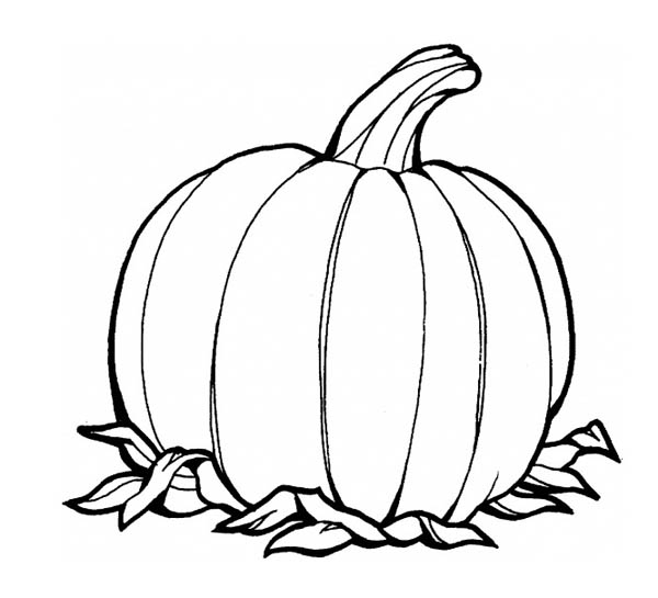 Awesome Pumpkins Fruit Coloring Page Download Print Online