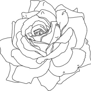 Rose with Thorn Coloring Page