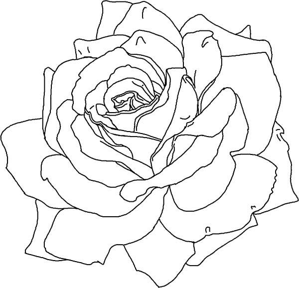Awesome Rose Picture Coloring Page Awesome Rose Picture