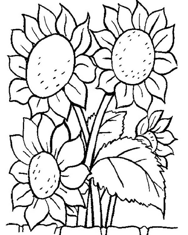 Awesome Sun Flower Coloring Page: Awesome Sun Flower Coloring Page ...