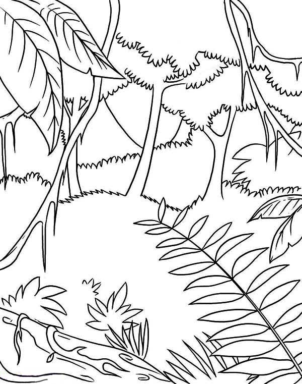 Awesome Tropic Rainforest Coloring Page - Download & Print Online ...