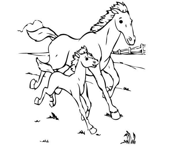 Baby Horse Running with His Mother in Horses Coloring Page ...