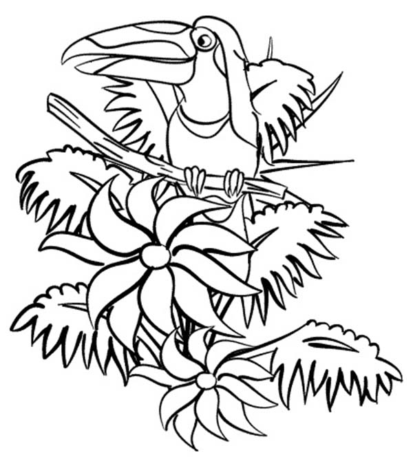beautiful hornbill rainforest coloring page