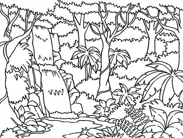 Beautiful Rainforest Coloring Page - Download & Print Online ...