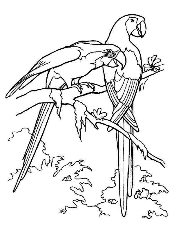 beautiful rainforest parrot coloring page download print - Parrot Pictures To Color
