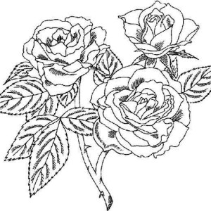 beautiful rose coloring page