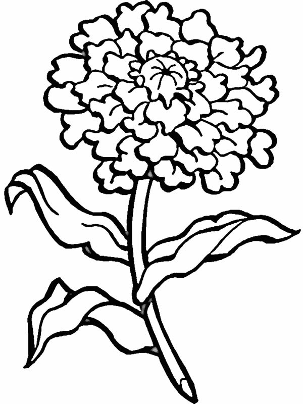 Blooming Flower Coloring Page - Download & Print Online Coloring ...