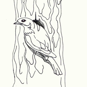 Blue Bird in Front of His Nest Coloring Page