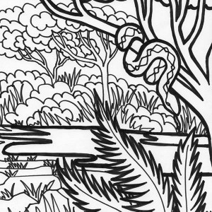 Boa Snake Rainforest Animal Coloring Page