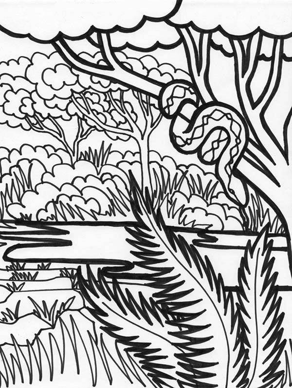 rainforest animal coloring pages - boa snake rainforest animal coloring page boa snake