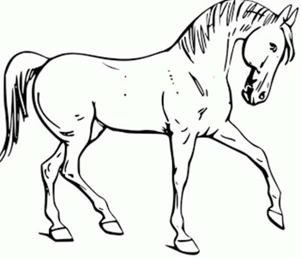 calm horse in in horses coloring page