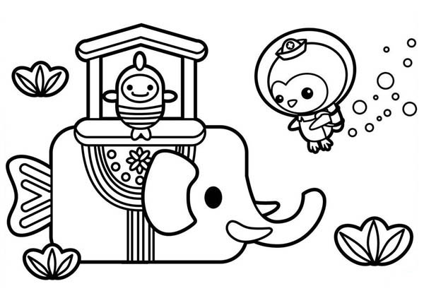 Captain Barnacles from The Octonauts Meet Sea Elephant Coloring