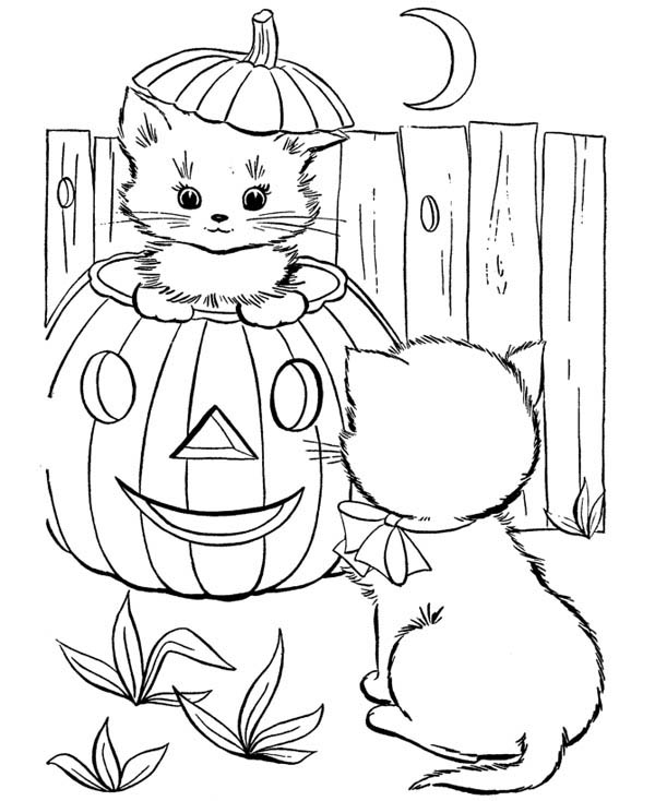 Cute Little Cat In Pumpkins Play With Her Friend Coloring Page