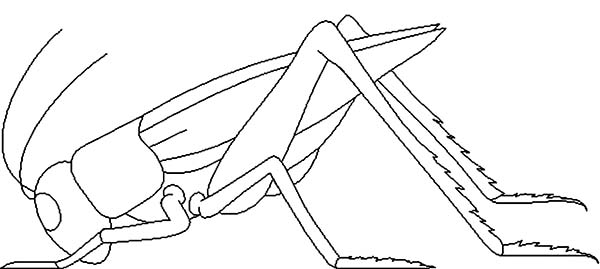 dead grasshopper coloring page - Grasshopper Coloring Page
