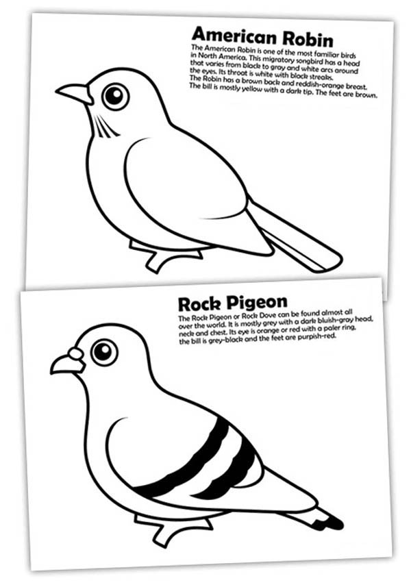 Diffrence of American Robin and Rock Pigeon Coloring Page