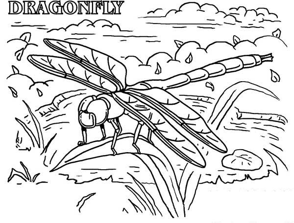 dragonfly rainforest insect animals coloring page - download ... - Rainforest Insects Coloring Pages
