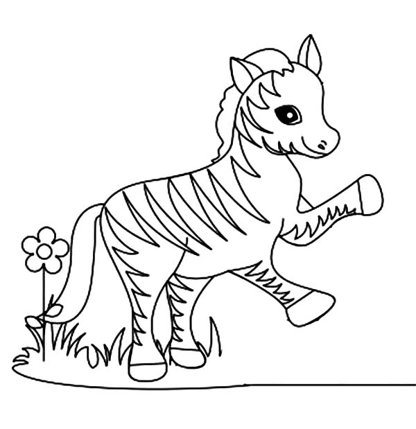 Funny Little Zebra Coloring Page Download Print Online Coloring