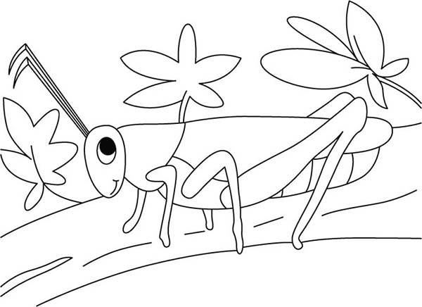 grasshopper in the garden coloring page - Grasshopper Coloring Page