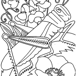 Grasshopper on the Flower Coloring Page