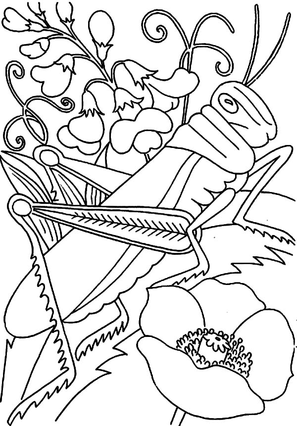 Grasshopper on the Flower Coloring Page Download Print Online