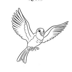 Red Robin Bird Coloring Page