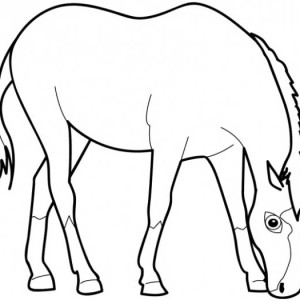 Horse Eating Grass in Horses Coloring Page