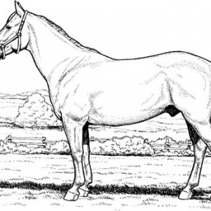 Horse in the Meadow in Horses Coloring Page