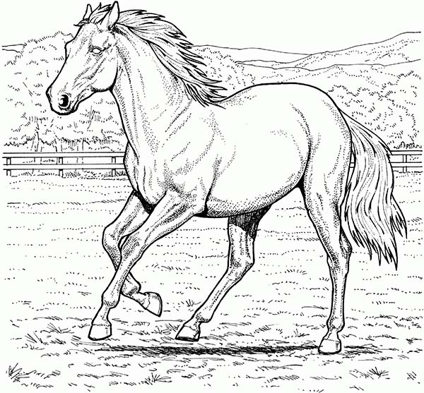 horse with beautiful mane in horses coloring page