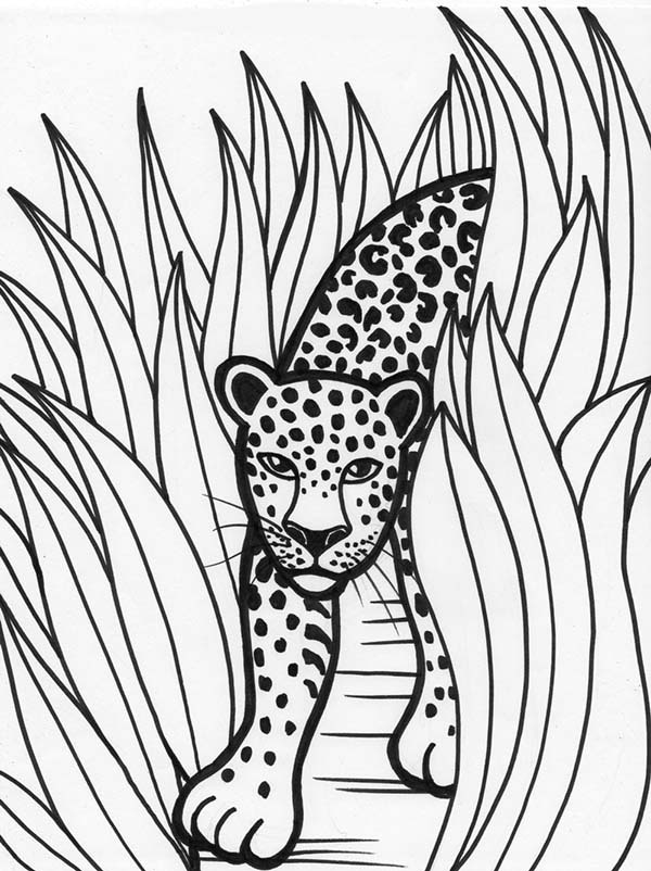 Leopard Rainforest Predator Coloring Page - Download & Print ...