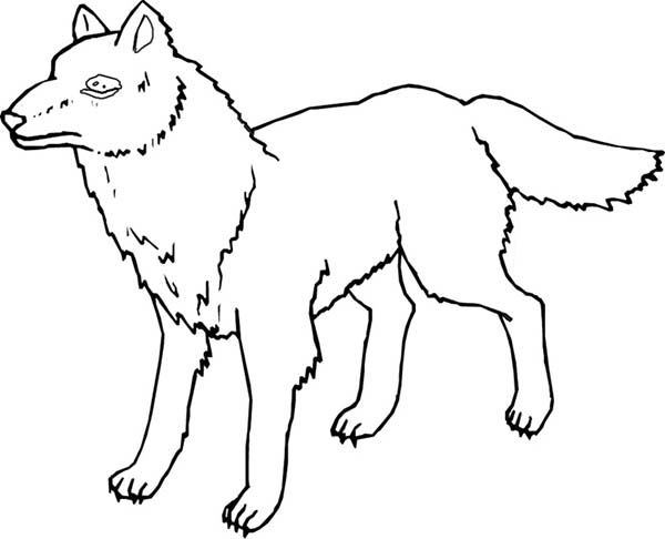 Minnesota Wolf Coloring Page - Download & Print Online Coloring ...