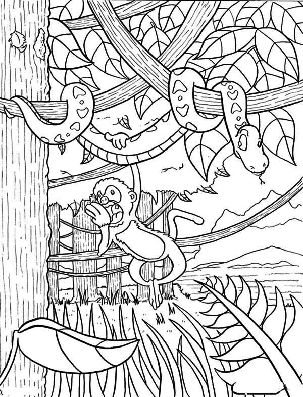 Monkey Hanging on Snake Rainforest Coloring Page - Download & Print ...