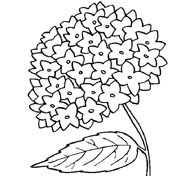 my mother flower coloring page my mother flower coloring page - Flowers To Print And Color