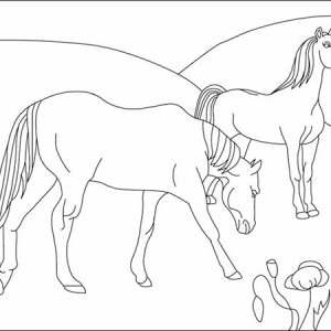 Picture of Horses Couple Coloring Page