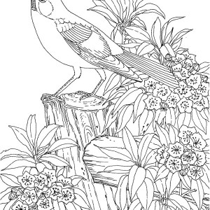 Picture of State Bird Coloring Page