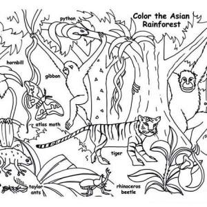 Rainforest And Waterfalls Coloring Page Rainforest And