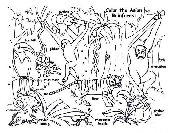 brazilian rainforest animals coloring pages - photo #22