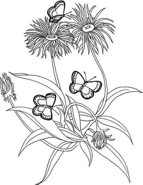 Rainforest Butterfly And Flower Coloring Page