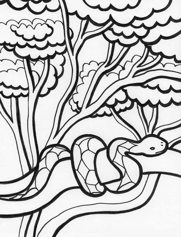 rainforest rainforest snake on tree coloring page rainforest snake on tree coloring pagefull size