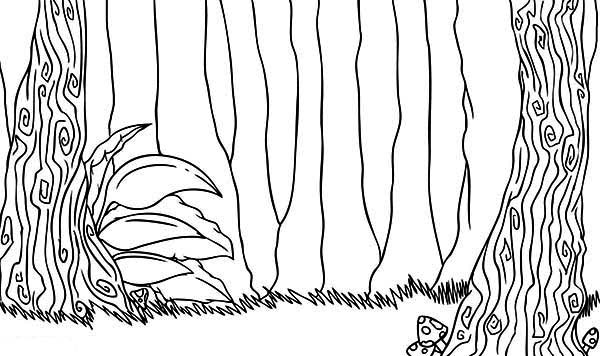Rainforest trees coloring page download print online for Rainforest leaves coloring pages