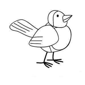 Robin Bird Drawing Coloring Page