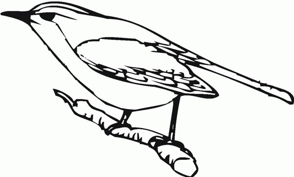 Print Robin Bird Intimidated Coloring Page In Full Size