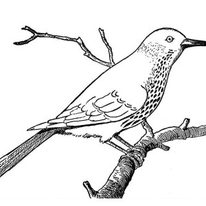 Robin Bird on Dead Tree Branch Coloring Page