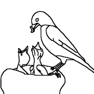 Robin Feeding Her Babies Coloring Page