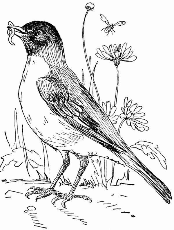 Robin in Flower Garden Coloring Page Download Print Online