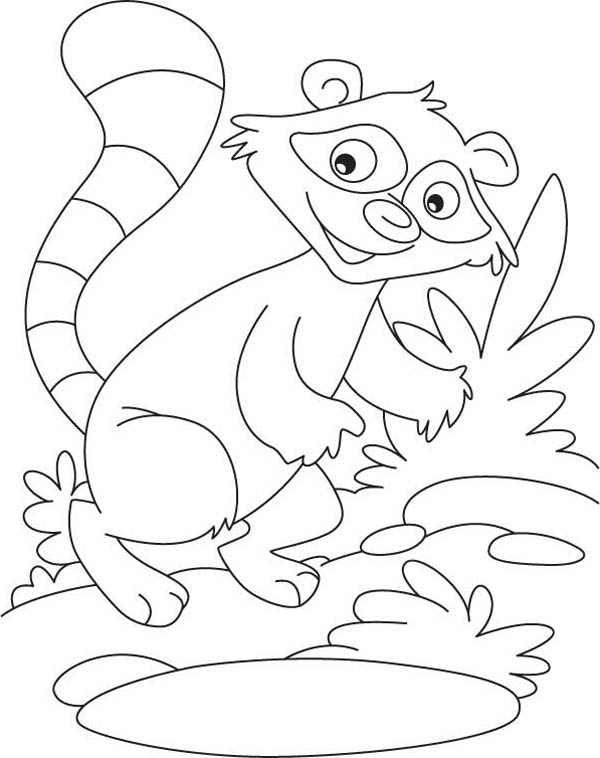 rocky the raccoon coloring page download print online coloring - Chester Raccoon Coloring Page